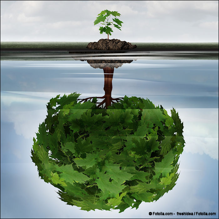 Potential success concept as a full-grown tree as a reflection in water of a sapling